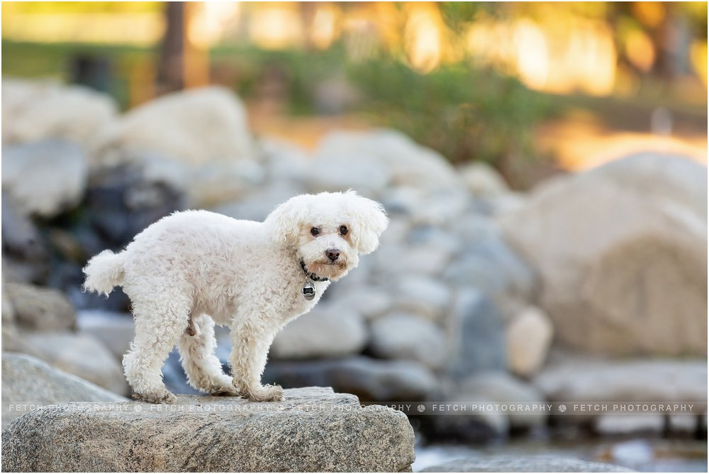 los-angeles-dog-photographer.jpg