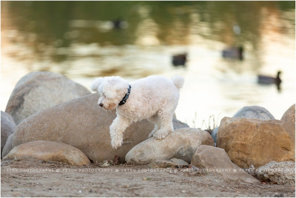 los-angeles-rescue-dog-photographer