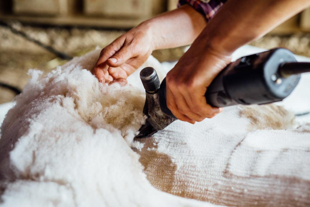 3 Shearing.jpg