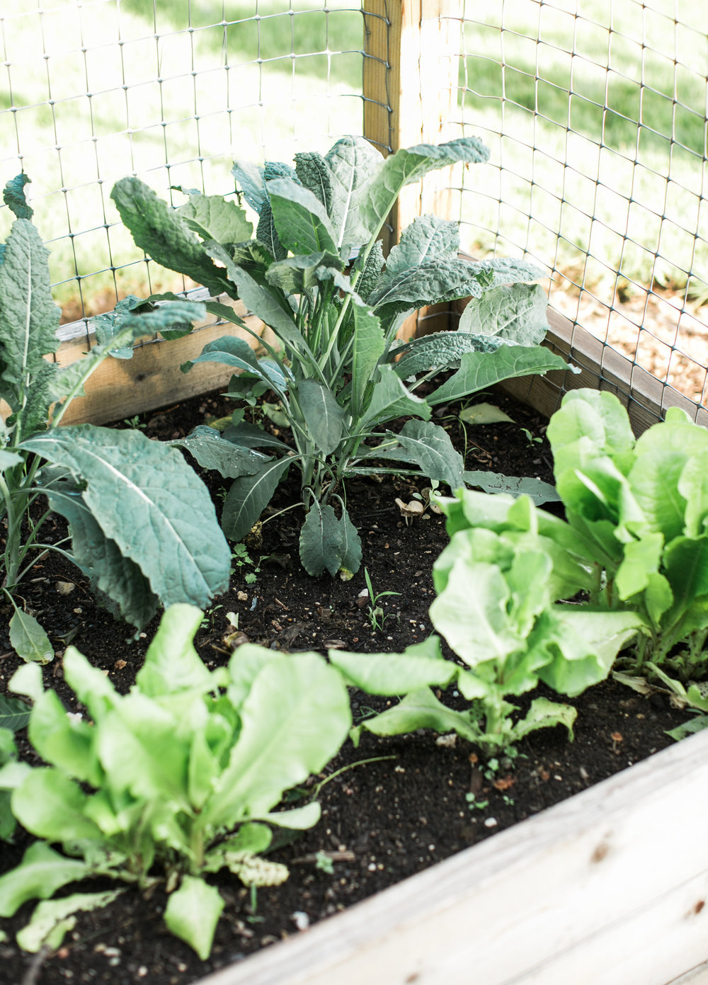 Compost is Perfect for the Garden - Wholesome LLC