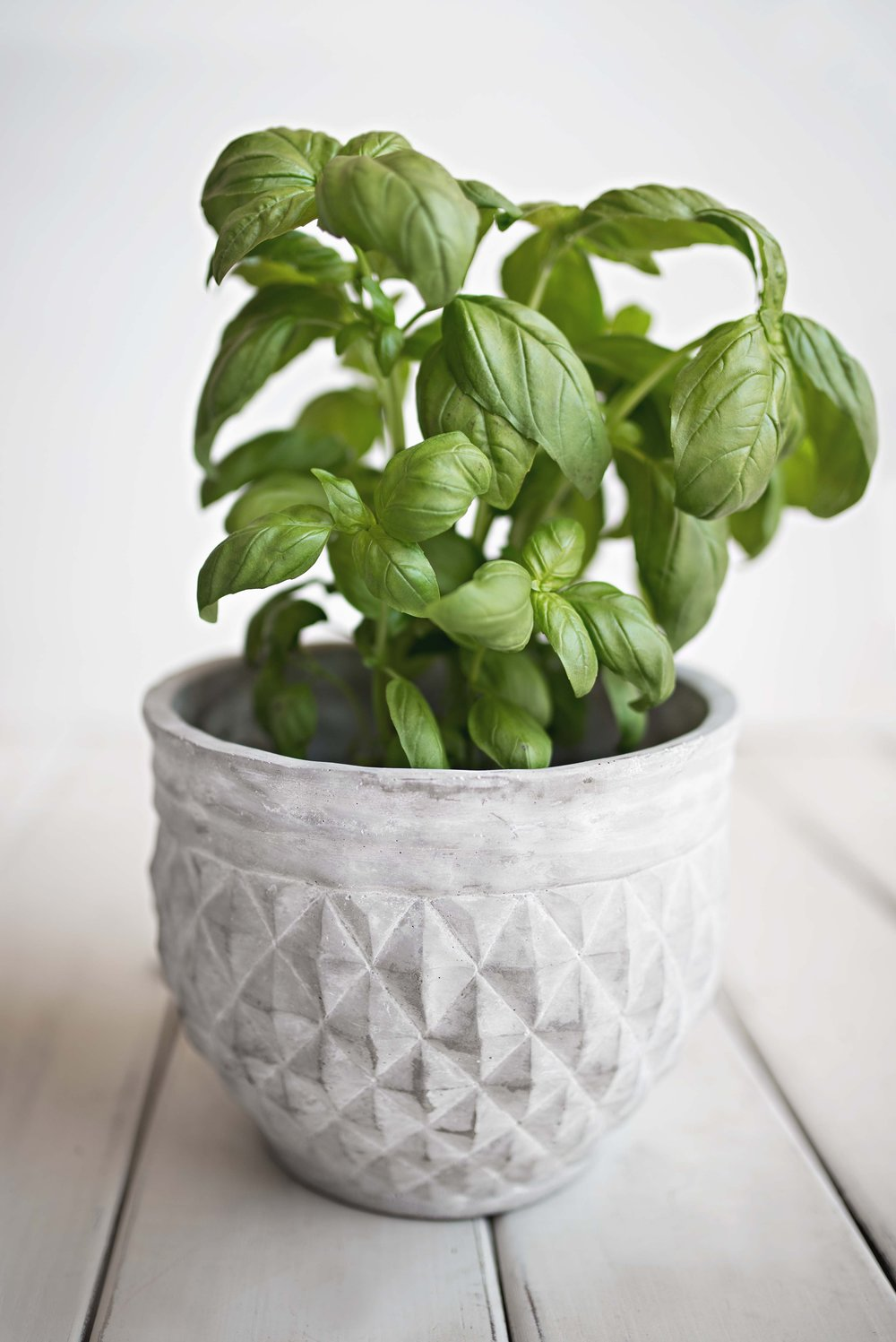Not only is Basil tasty, it's beautiful!