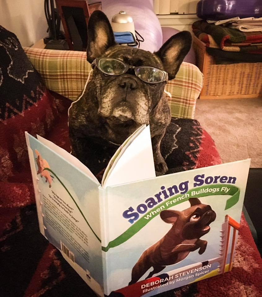 "Bogart, a very talented agility Frenchie himself, enjoying his copy of  Soaring Soren .  He had this to say:  ""The best book ever--inspirational!!!"""