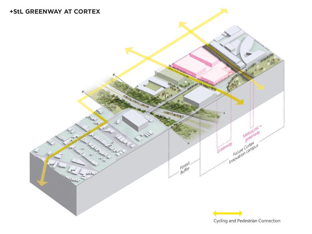 axon cortex.jpg
