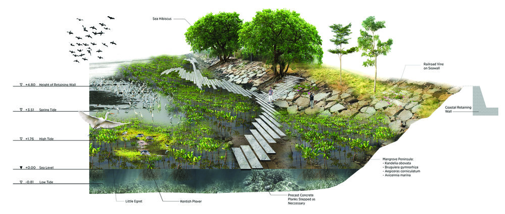 mangrove OT.jpg