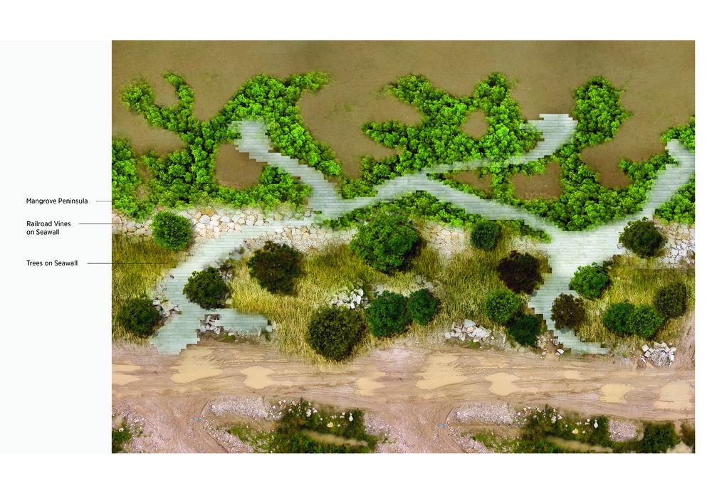 mangrove plan OT.jpg