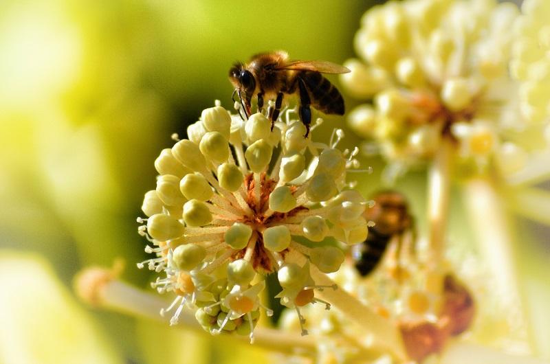 Bravo bees!