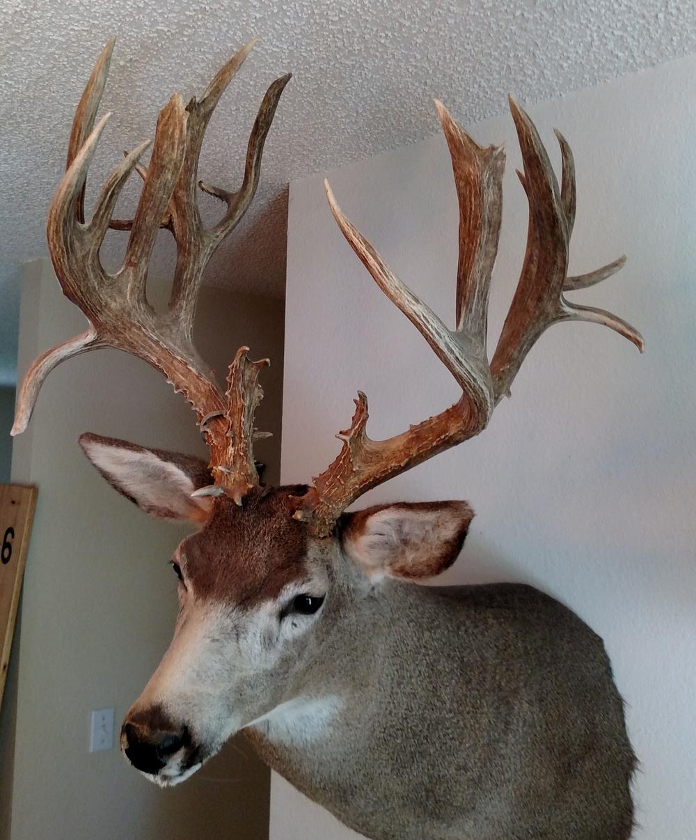 Trophy Deer.jpg