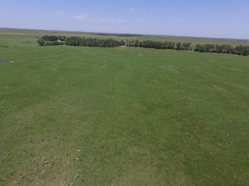 across meadow.jpg