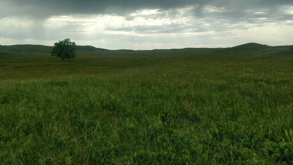 south pasture.jpg