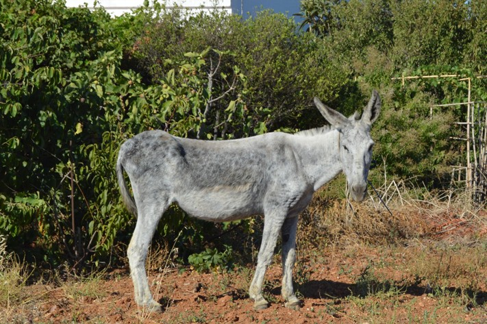 A stray donkey