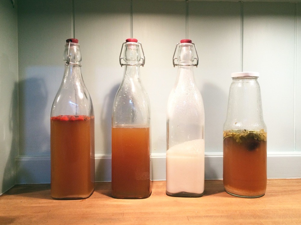 Water kefir, kombucha and milk kefir fermenting in my kitchen