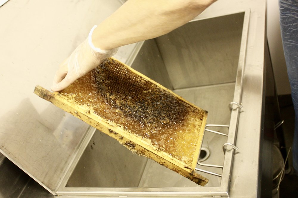 The beeswax of the LHM honey is scraped off by hand before the honey is sucked out of the honeycomb in a centrifugal machine.