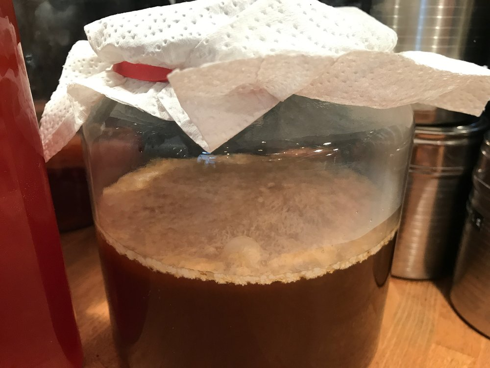 """It's alive!"" – healthy SCOBY forming on a kombucha"