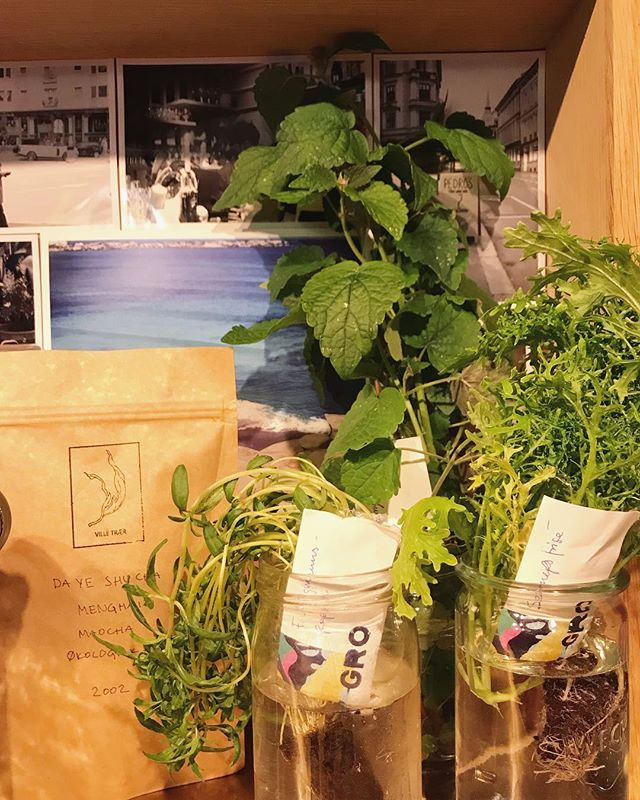 Starting the year right with som beautiful new producers in the shop... @grogrontoslo for herbs and micro greens and @villetraer for fermented teas⚡️⚡️⚡️