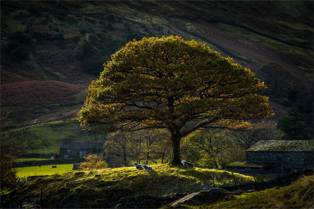The Langdale Oak by Barry Webb  Winner Millennium Plate Trophy for Landscape - DPI