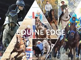 T.H.E. Equine Edge - Natural equestrian supplementsBalancing a horse's natural ability to function at the highest leveltheequineedge.co.uk