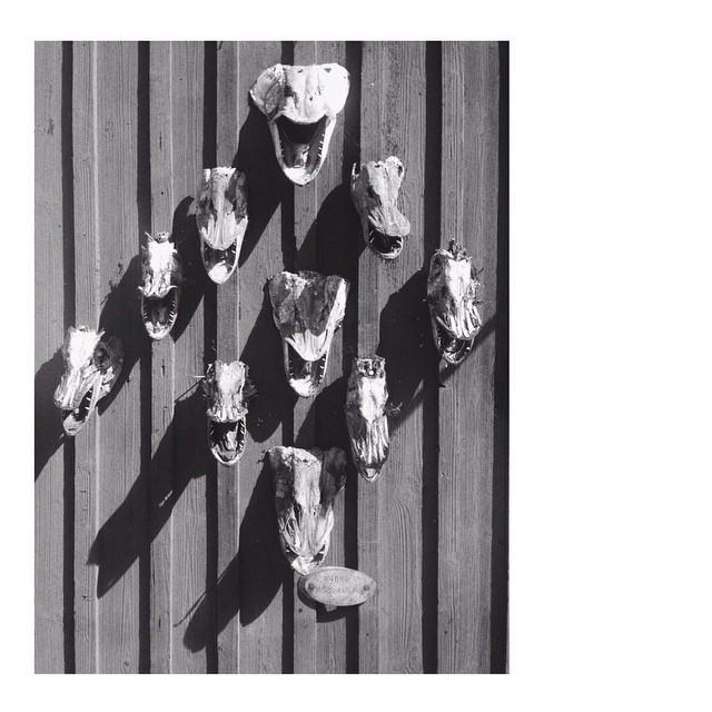 #vscocam #teeth #skull #fish