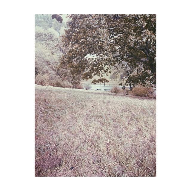 Arid #summer #parks