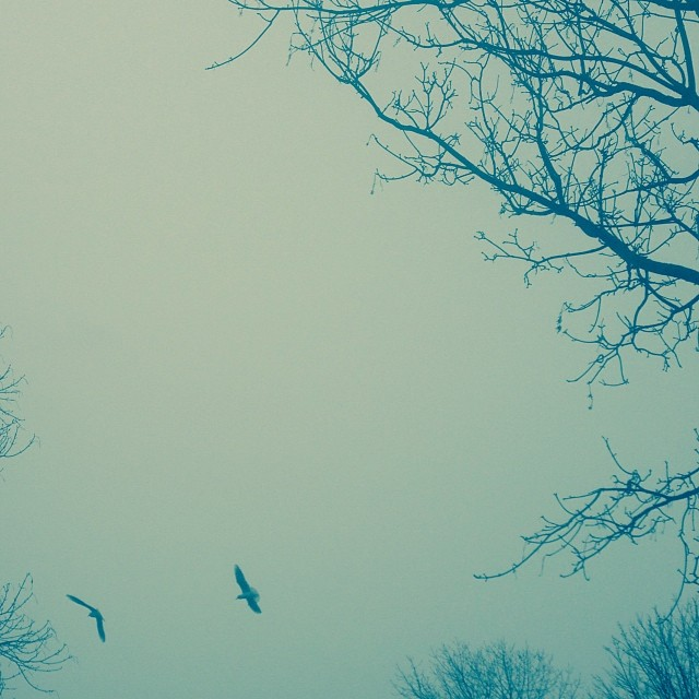 I woke to her #flight in the #mist of the #morning
