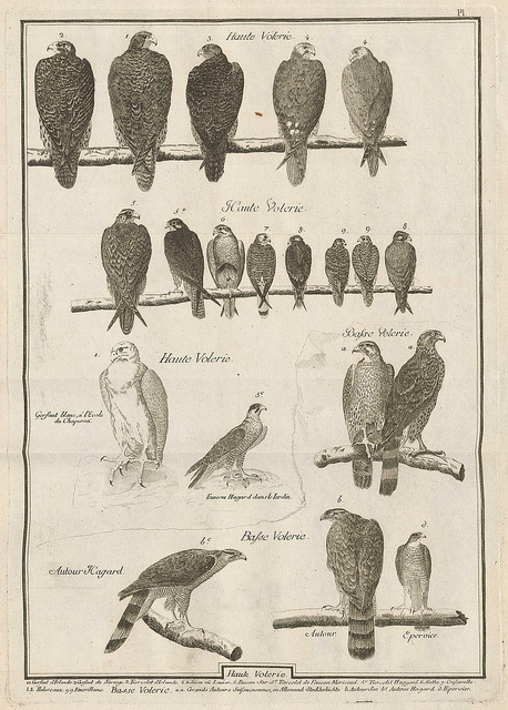 dendroica :      Observations sur le vol des oiseaux de proie by Jean Huber 1784 a  by  peacay  on Flickr.      Bird observations by Jean Huber 1784.