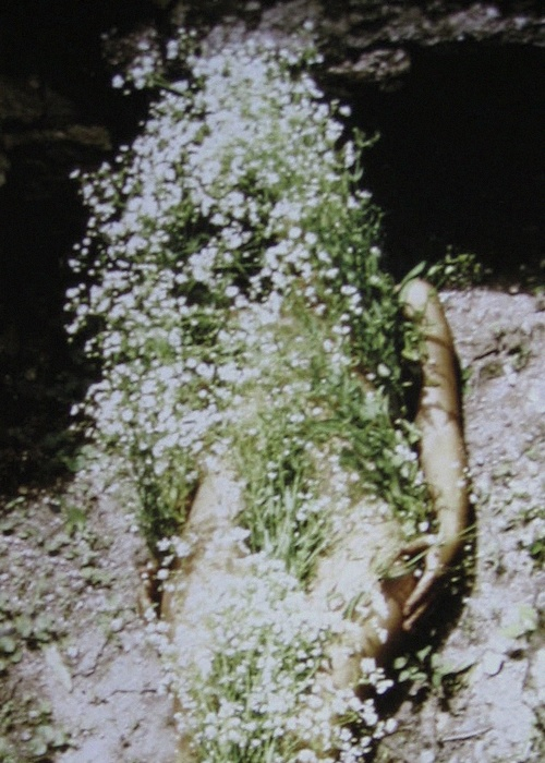efedra: Flowers on Body, 1970 by Ana Mendieta