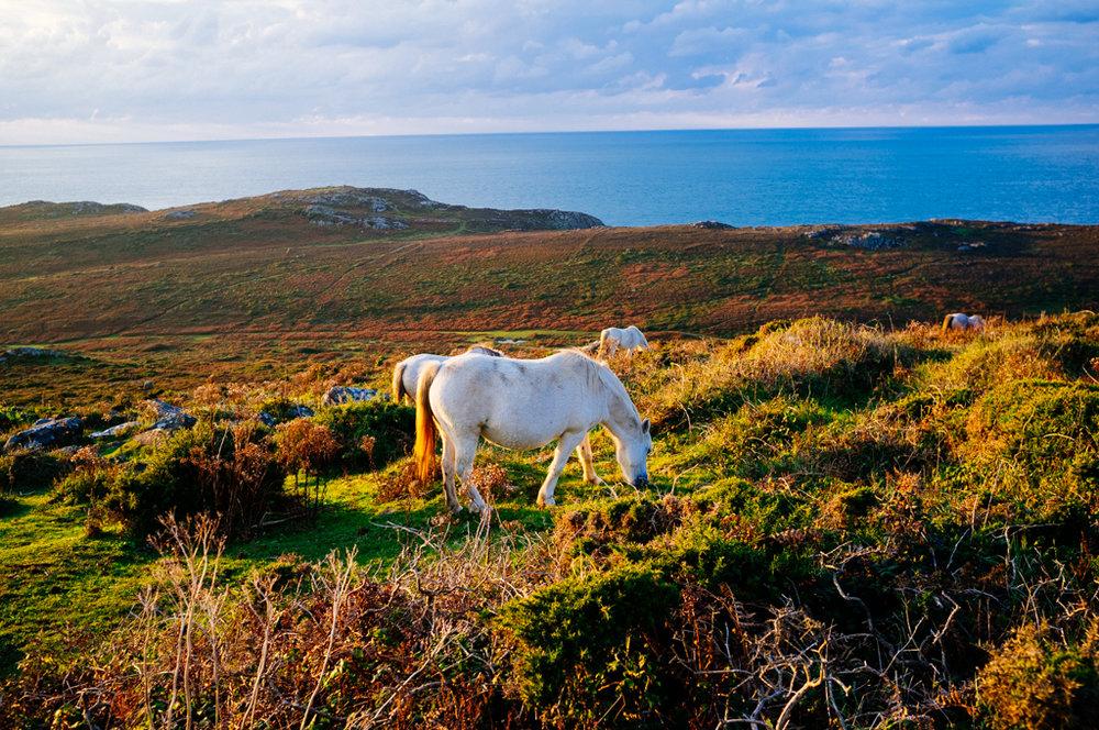 Wales-75.jpg