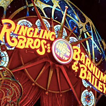 RINGLING BROTHERS / BARNUM & BAILEY