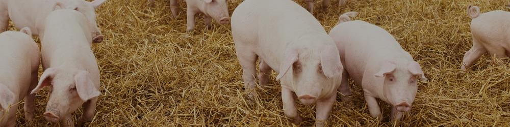 Increasing farm profits