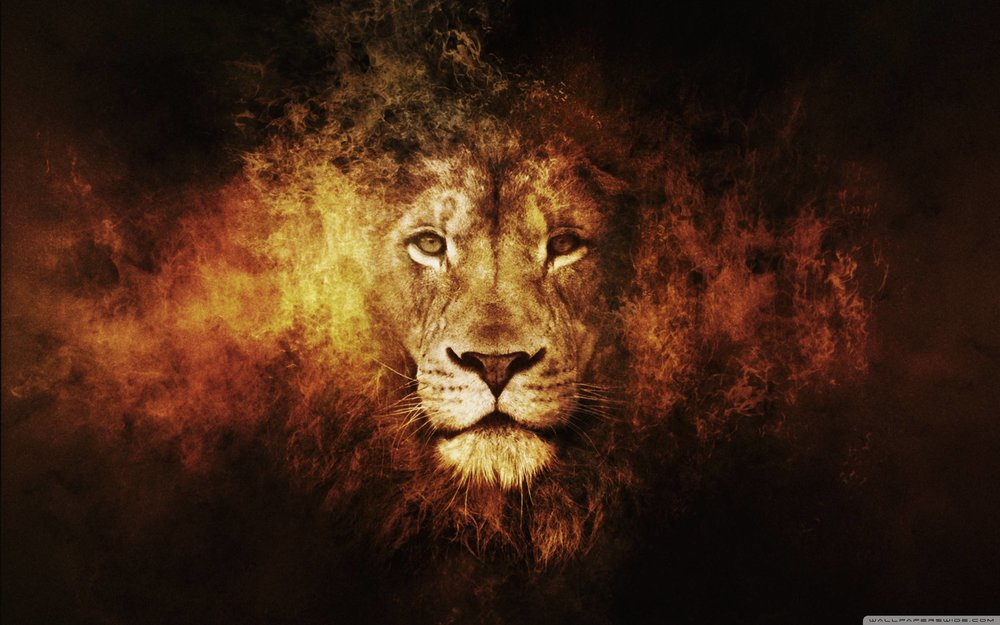 Best-Lion-Wallpaper.jpg