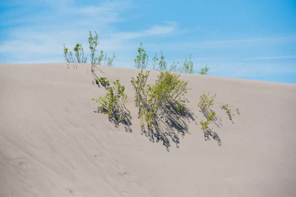 Sand Dunes  on Red Road, Idaho - we've never brought our riders to the dunes before!