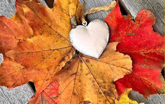 leaves-2808547_640.jpg