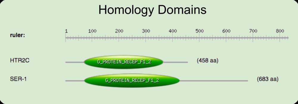 prosite domain HTR2C ser-1.png