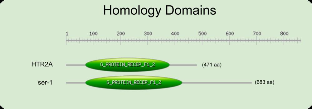 Homology domain - HTR2A ser-1.png