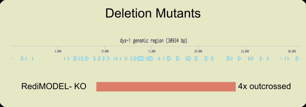 genomic locus - dys-1 KO.png