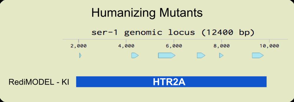 genomic locus - HTR2A CV.png