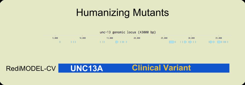 genomic locus - UNC13A CV.png