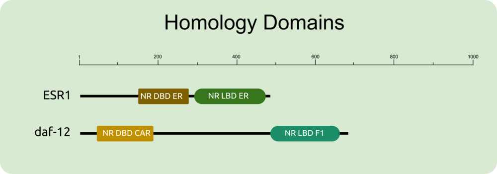Protein domain - slc6a3 dat-1.png