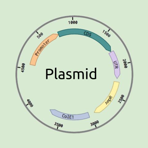 Plasmid logo.png