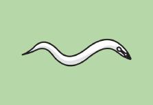 icon_c-elegans.png
