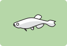 icon_zebrafish.png
