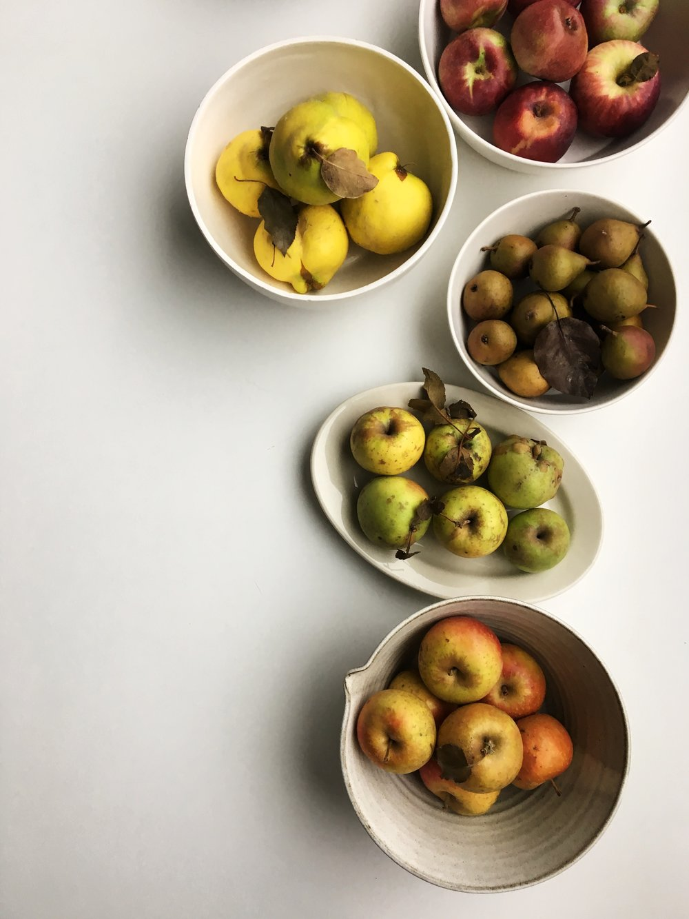 Fall fruits sourced from the Union Square Farmers Market. Apples, quince, and pears.