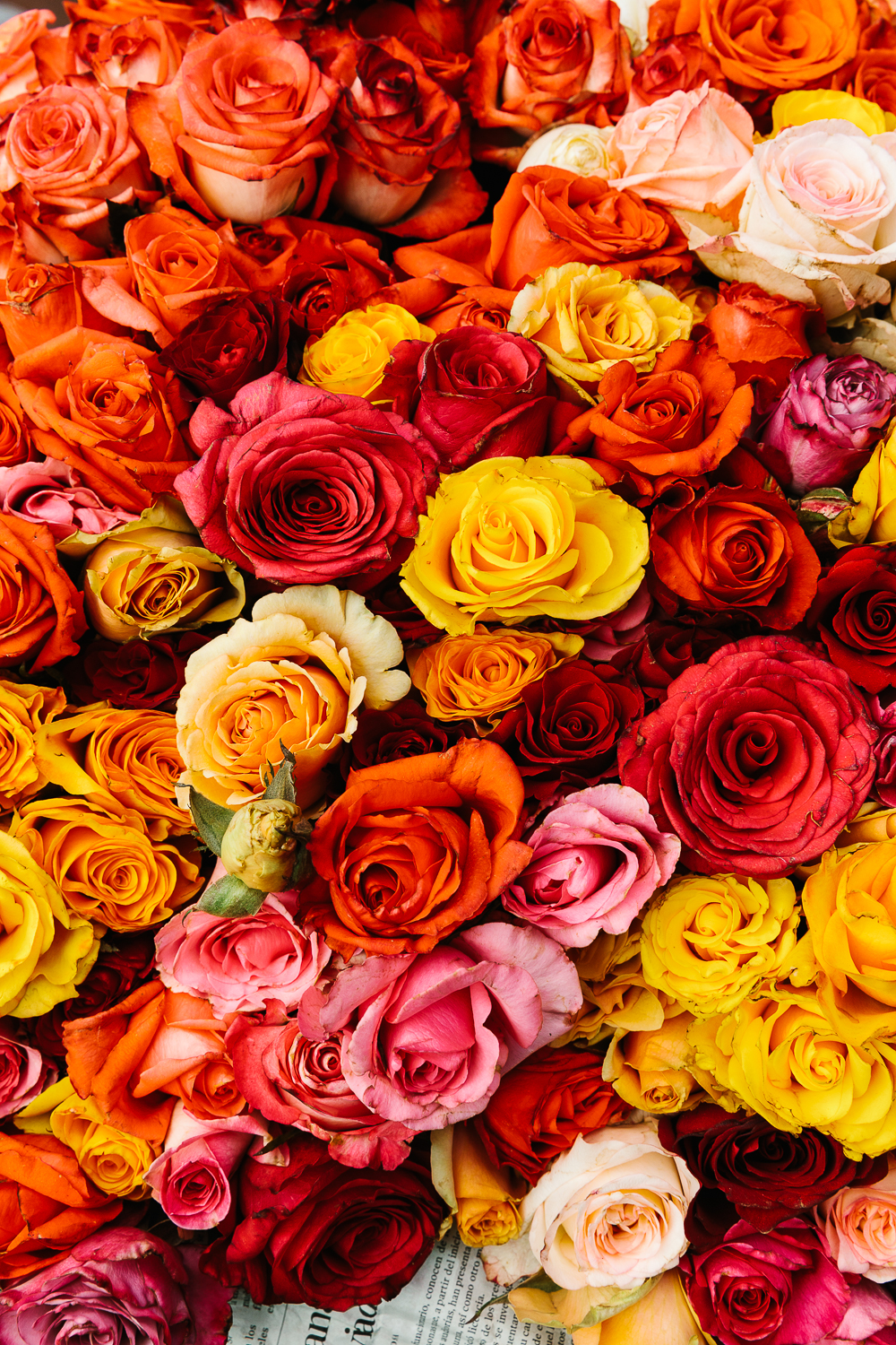 Roses at the mercado