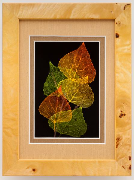 5x7 Shadowbox Cottonwood