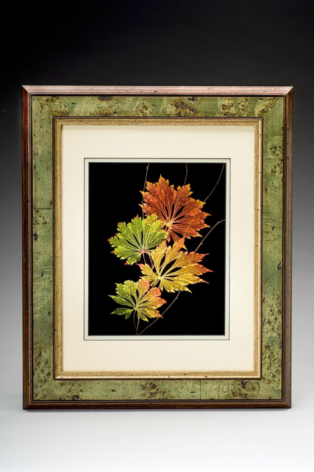 Shadowbox 11x14 Full-moon Japanese Maple