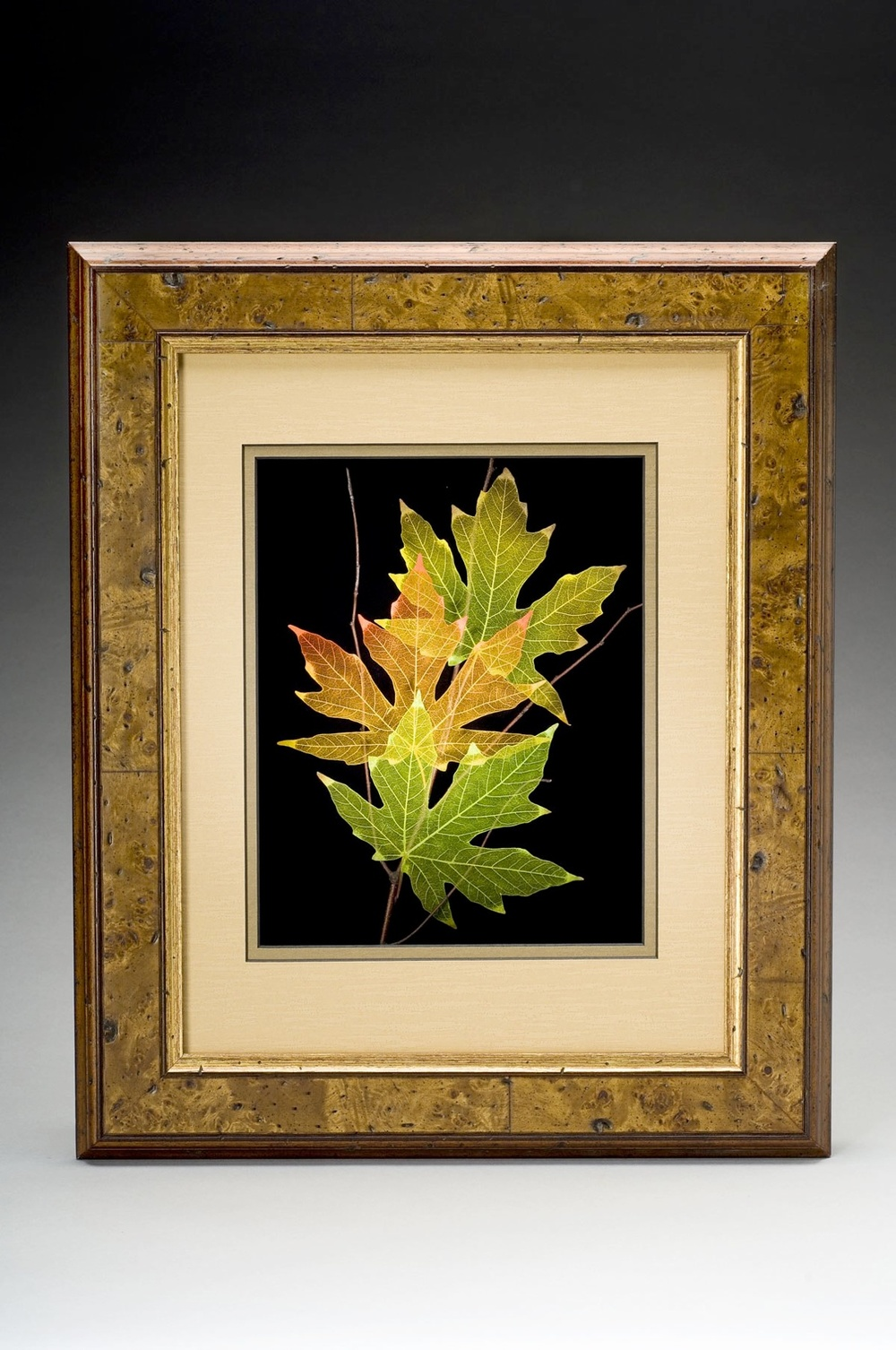 Shadowbox 11x14 Big-leaf Maple