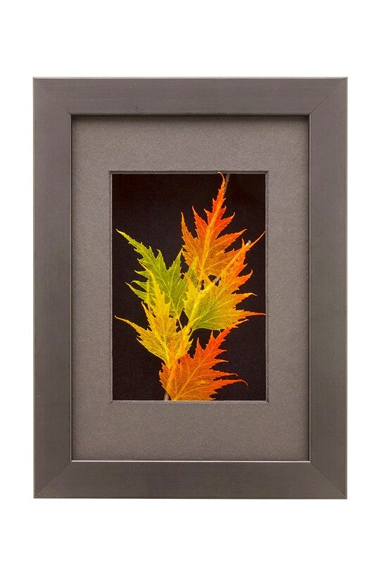 5x7 Shadowbox Cutleaf Birch