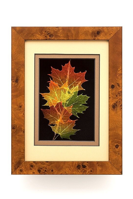 5x7 Shadowbox Norway Maple