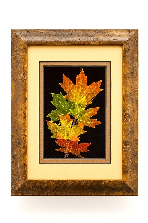 5x7 Shadowbox Sugar Maple