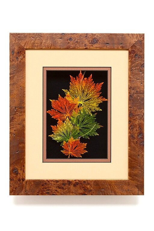 Shadowbox 8x10 Full-mooon Japanese Maple