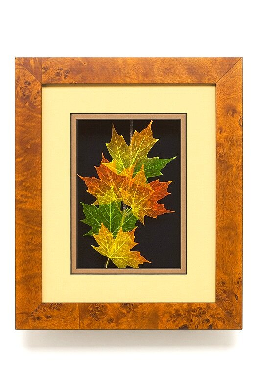 Shadowbox 8x10 Sugar Maple
